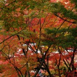 japan_tofuku-ji_autumn_2011_51