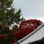 japan_tofuku-ji_autumn_2011_56