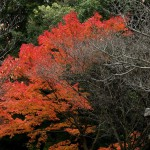 japan_tofuku-ji_autumn_2011_57