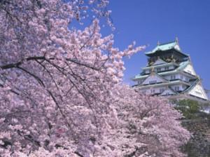 Сакура зацветёт уже совсем скоро