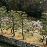 japan_plum_trees_kyoto_01