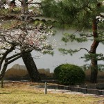 japan_plum_trees_kyoto_25