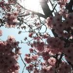 japan_hanami_2012_23