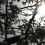 japan_hanami_2012_36