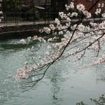 japan_sakura_2012_08
