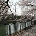 japan_sakura_2012_09
