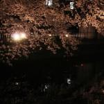 japan_sakura_2012_14