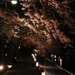 japan_sakura_2012_17