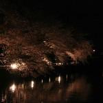 japan_sakura_2012_24