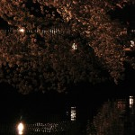 japan_sakura_2012_25