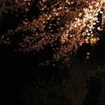 japan_sakura_2012_27