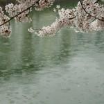 japan_sakura_2012_32
