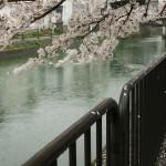 japan_sakura_2012_33