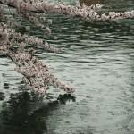 japan_sakura_2012_36