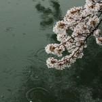 japan_sakura_2012_46