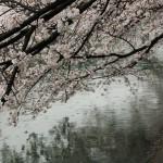 japan_sakura_2012_47