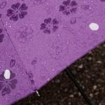 Это мой зонтик. Весь в сакурах, нарисованных и настоящих