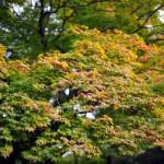 Листья только-только начали приобретать великолепную раскраску