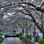 Деревья как будто защищают реку и дарят чудесную тень