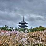 Пагода высоко возвышается над сакурой