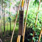Зелень и бамбук