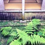 okinawa_shikinaen_garden_06