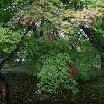 japan_momiji-gari_2012_05