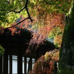 japan_momiji-gari_2012_11