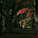 japan_momiji-gari_2012_12