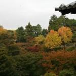 japan_momiji-gari_2012_14