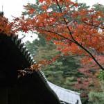 japan_momiji-gari_2012_21