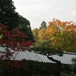 japan_momiji-gari_2012_23