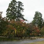 japan_momiji-gari_2012_26