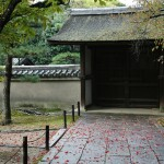 japan_momiji-gari_2012_28