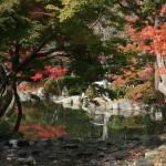 japan_momiji-gari_2012_2_14