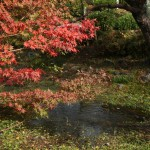 japan_momiji-gari_2012_2_15