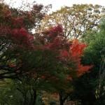 japan_momiji-gari_2012_2_19