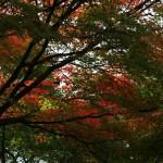 japan_momiji-gari_2012_2_20