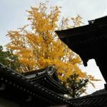 japan_momiji-gari_2012_2_25