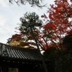 japan_momiji-gari_2012_2_26