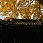 japan_momiji-gari_2012_2_27