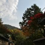 japan_momiji-gari_2012_2_37