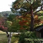 japan_momiji-gari_2012_2_45