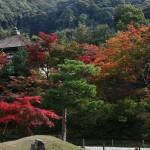 japan_momiji-gari_2012_2_47