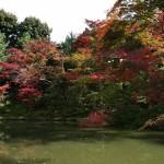 japan_momiji-gari_2012_2_50