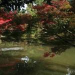 japan_momiji-gari_2012_2_51