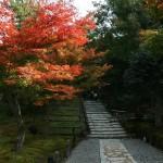 japan_momiji-gari_2012_2_52