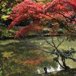 japan_momiji-gari_2012_2_56