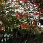japan_momiji-gari_2012_2_59