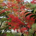 japan_momiji-gari_2012_2_60